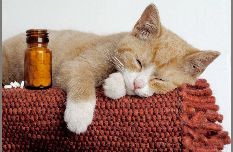 Простуда у кошек, симптомы и лечение в домашних условиях