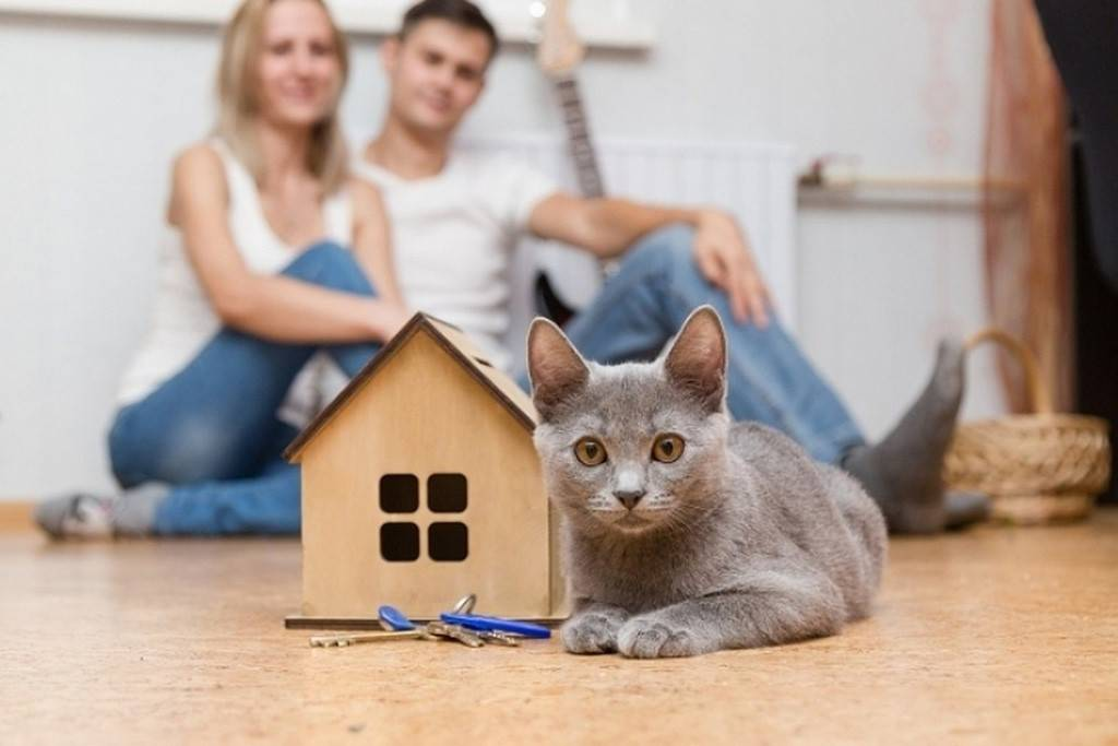 Как адаптировать кота к новому дому и приучить кошку к новому хозяину