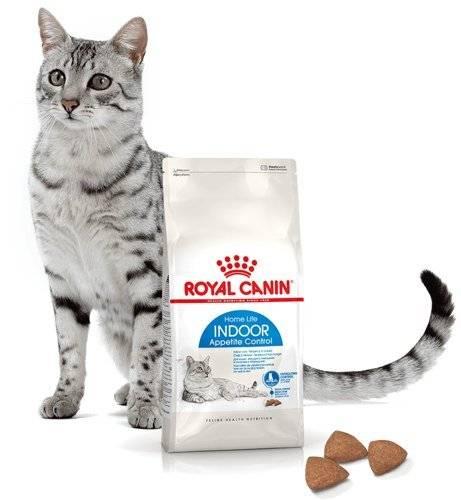 Корм для кошек acana: отзывы, разбор состава, цена