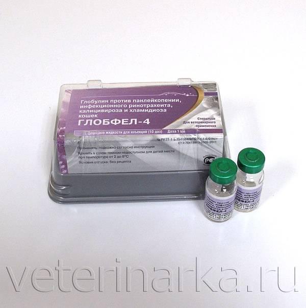 Глобфел-4 для кошек: инструкция по применению, цена сыворотки, дозировка