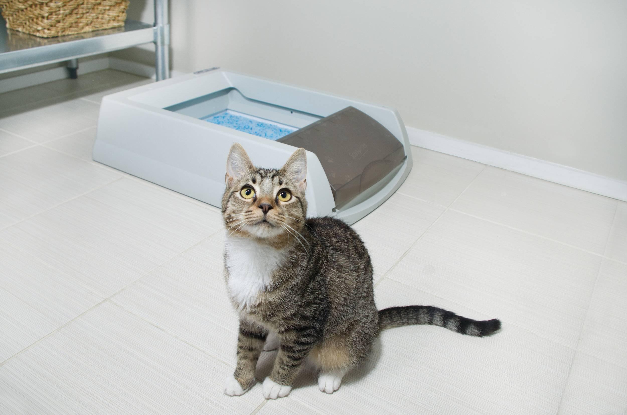Почему кот не может сходить по-маленькому и как ему помочь