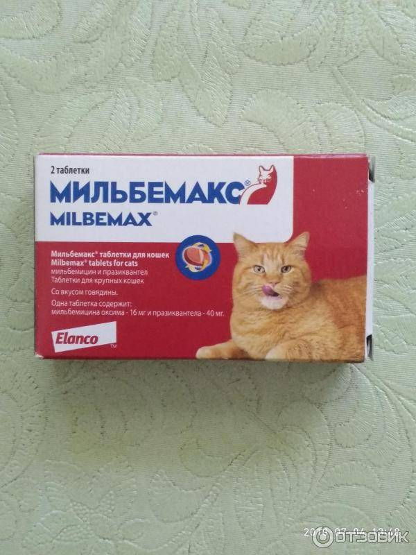 Мильбемакс для кошек: инструкция по применению, как правильно давать, дозировка по весу, возможные побочные эффекты