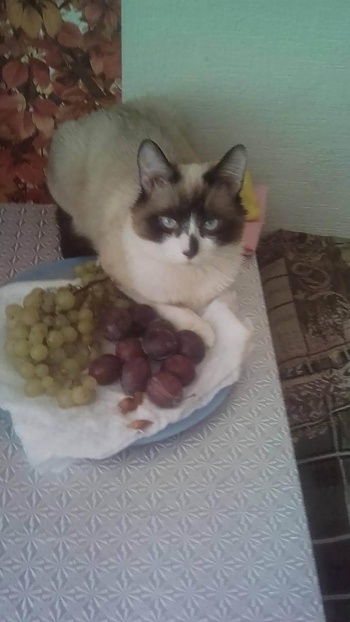 Кошка не пьет воду: причины, что делать, вредно ли это?