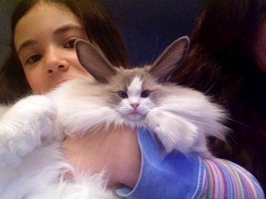 Чистим зубы коту в домашних условиях: средства и секреты