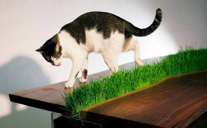 Домик для кошки своими руками - подробная пошаговая инструкция с фото идеми