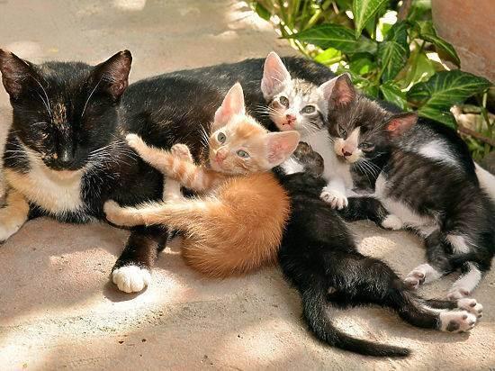Беременность и кошки