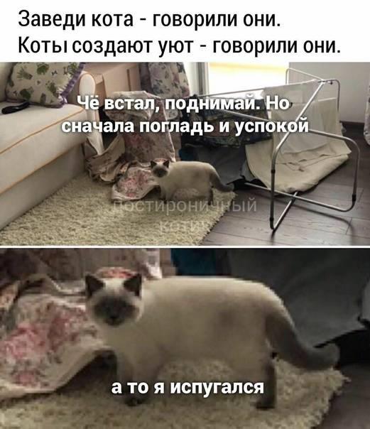 Как выбрать котёнка