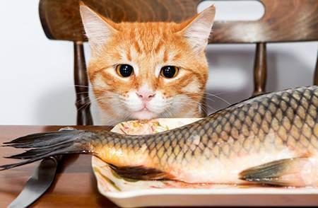 Какую воду давать кошкам и собакам