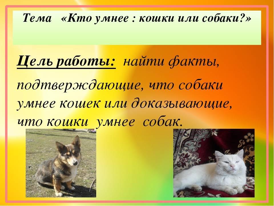 Кто умнее кот или собака: мнение эксперта
