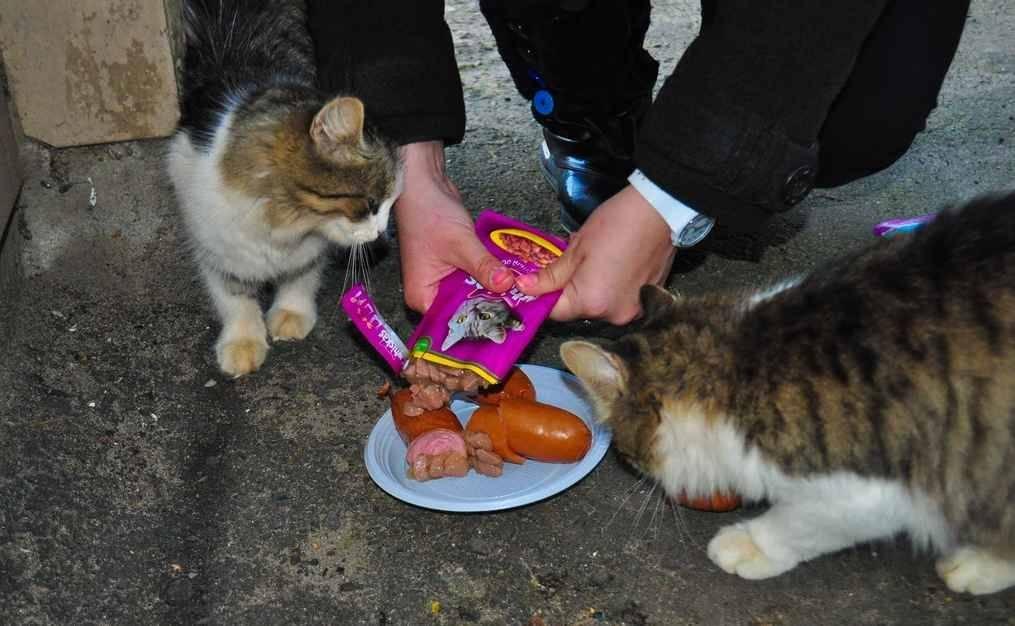 У кошки в горле застряла рыбная косточка что делать