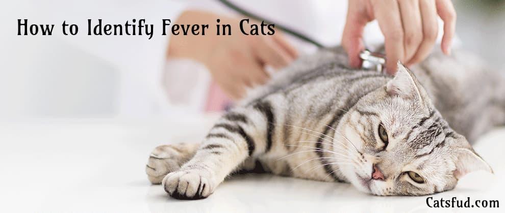 Почечная недостаточность у кошек, пиелонефрит и гломерулонефрит: болезни почек у котов - kotiko.ru