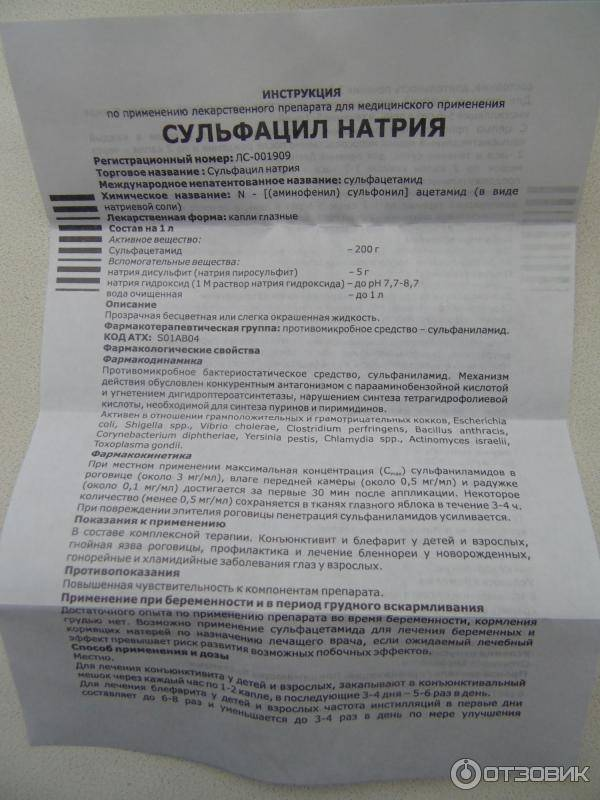 Почему нельзя капать альбуцид коту в нос - oozoo.ru