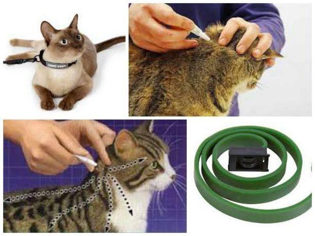 Как самостоятельно вывести блох котенку в домашних условиях