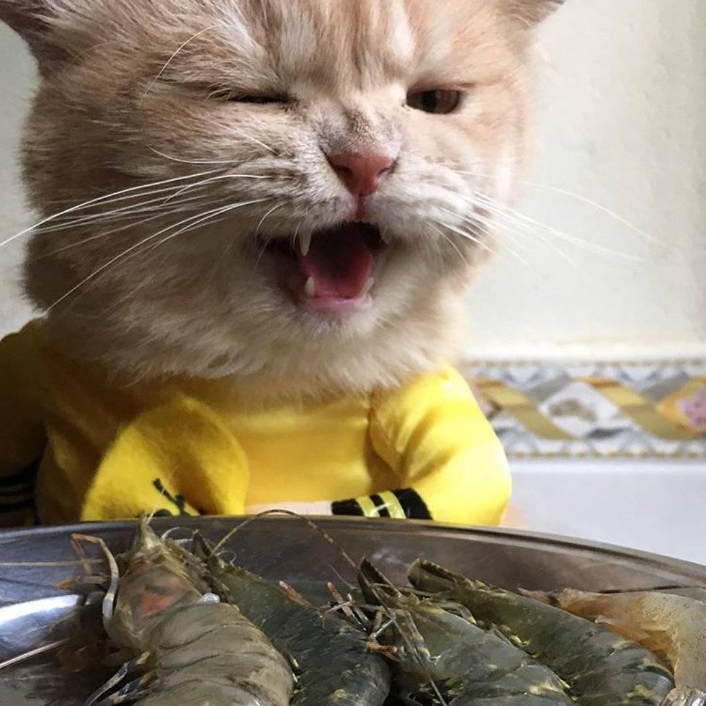Какую рыбу можно кошкам?