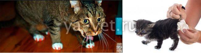 Рвота и понос у кошки - что делать?