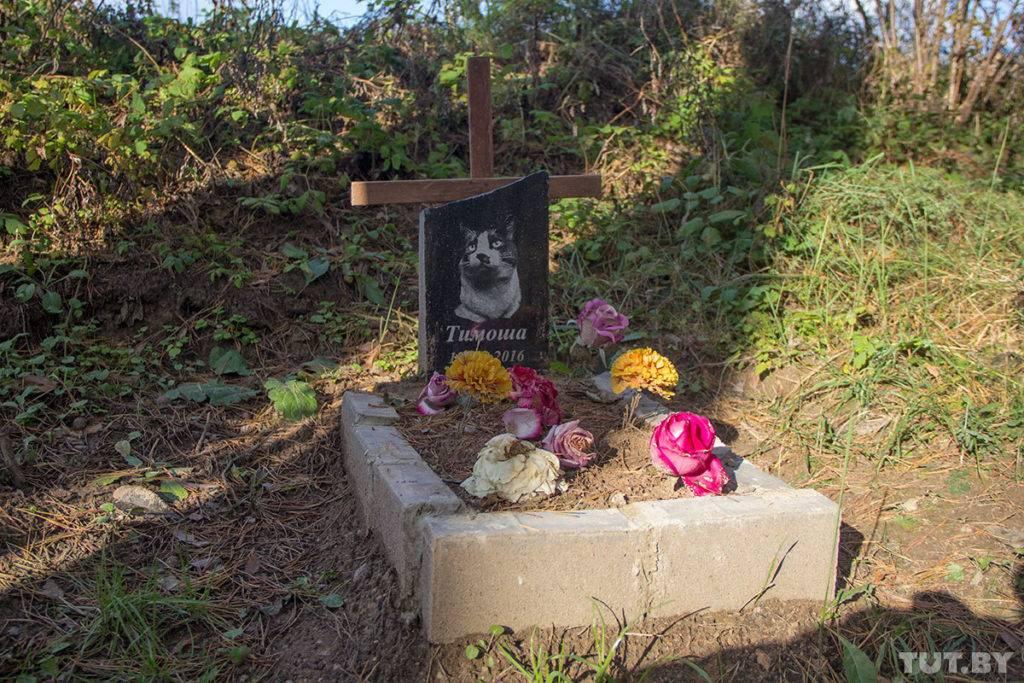 Можно ли хоронить животных на человеческом кладбище — как правильно похоронить кота?