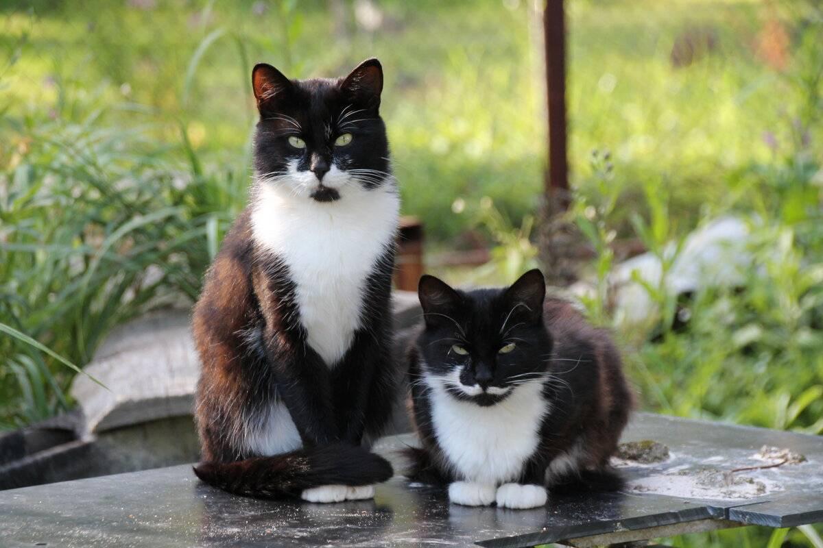 Как отучить кота метить территорию в квартире — полезные советы