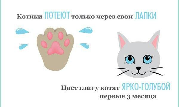 Потеют ли кошки: особенности физиологии кошек потеют ли кошки: особенности физиологии кошек