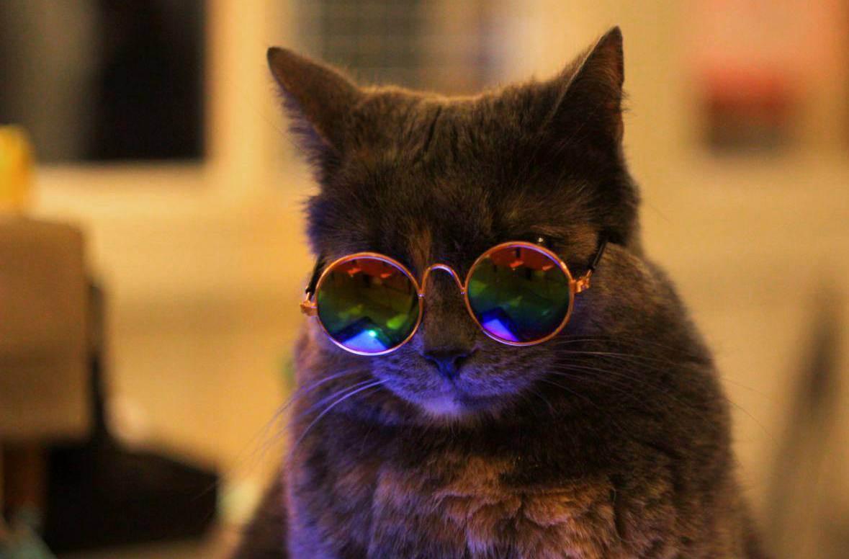 Определите интеллектуальный уровень вашей кошки » загадочные кошки