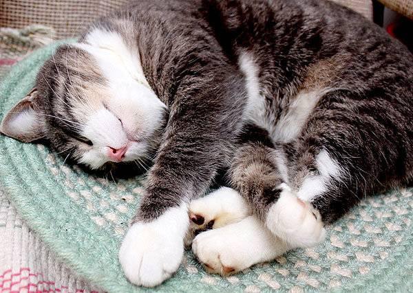 Кошка хрипит при дыхании и тяжело дышит открытым ртом: причины, что делать