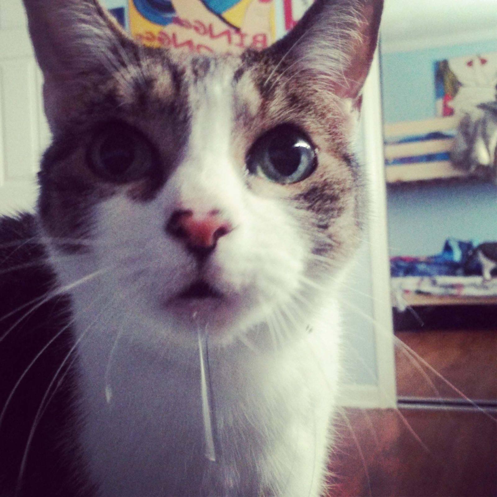Текут слюни у кота: причины и что делать?