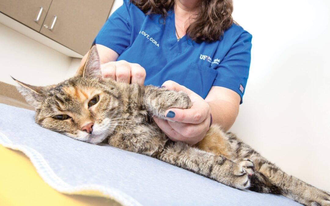 Нужно ли кастрировать домашнего кота и вредно ли это?