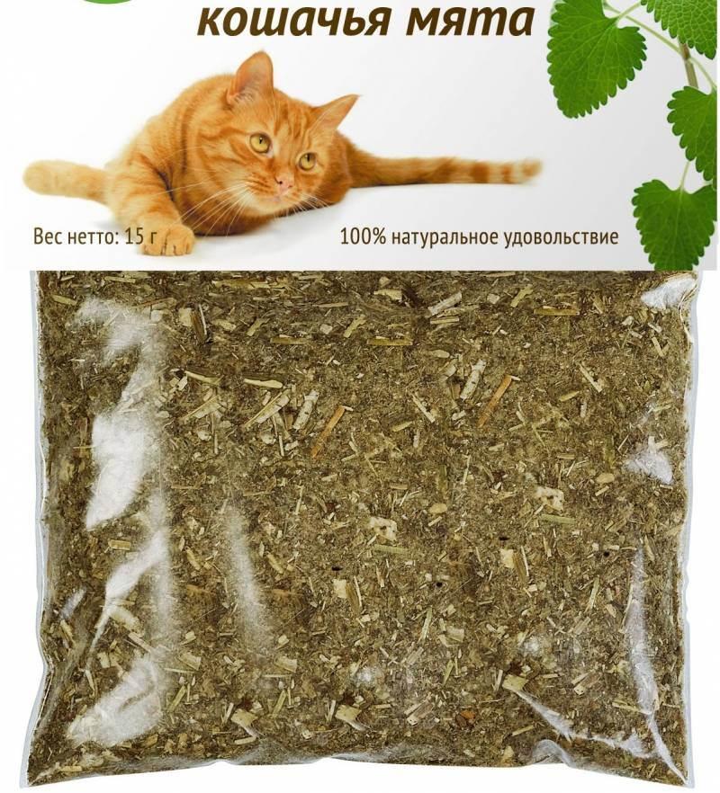 Какие запахи любят кошки?