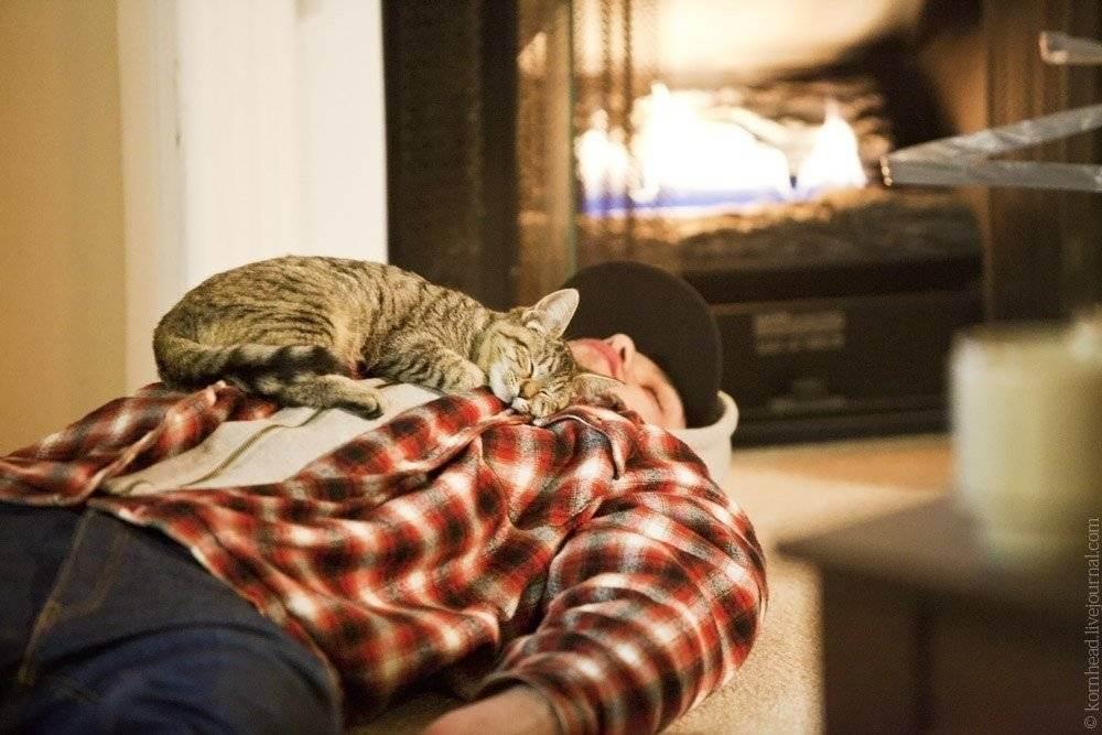 Почему кошки любят спать с хозяином: спят с хозяйкой, причины