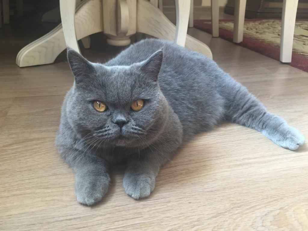 Лоток для кошек - разновидности и как правильно выбрать с высокими бортами, самоочищающийся или на унитаз