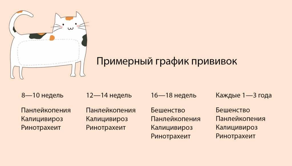 Прививки для котят: правила и порядок вакцинации ваших питомцев