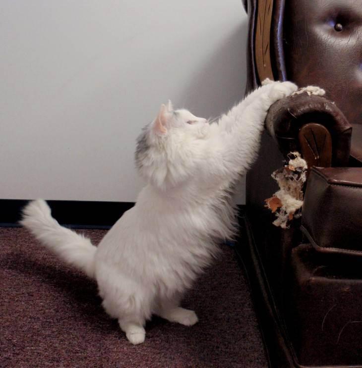 Как отучить кошку драть обои, причины и способы решения проблемы, видео