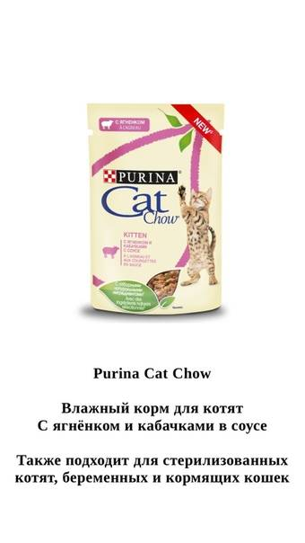Особенности питания кормящих кошек