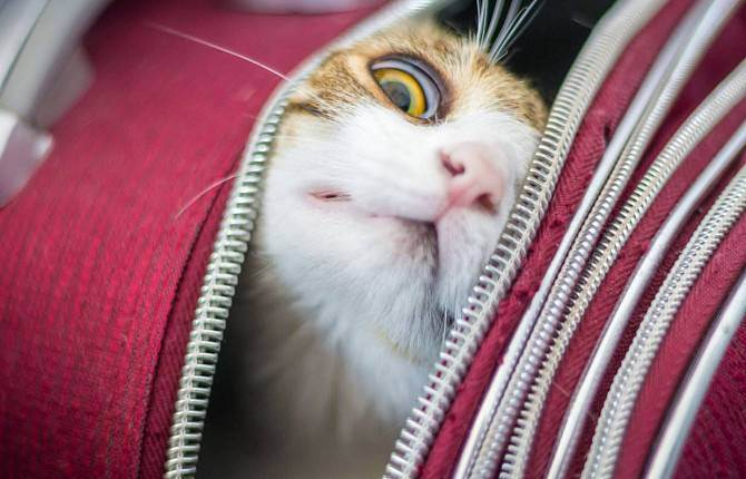 Путешествия с домашними животными: как правильно организовать