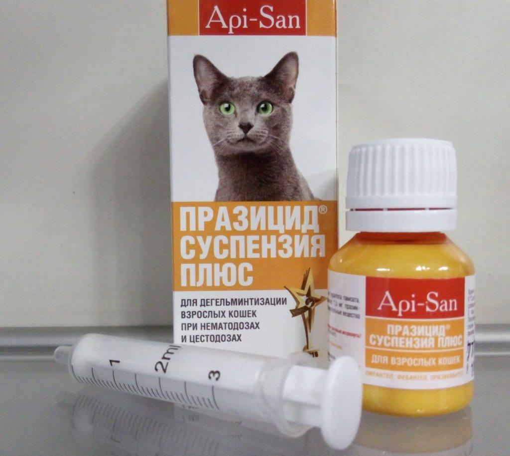 Нужно ли глистогонить кота перед кастрацией: правильная подготовка
