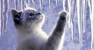 Tag archives: психология кошек