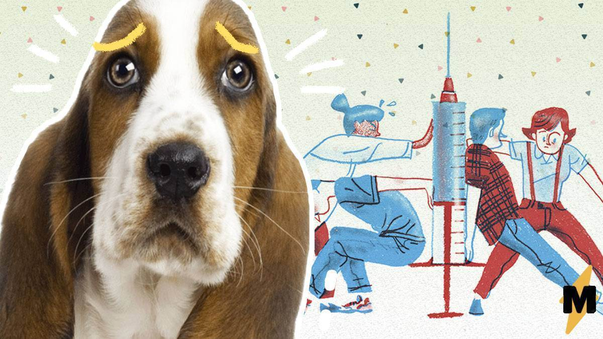 Как сделать прививку коту на дому самостоятельно — в мышцу и в холку