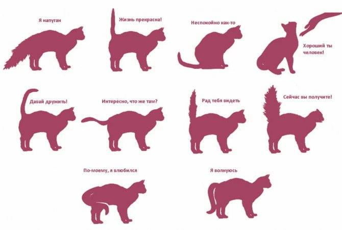 Почему кошка трясет хвостом как будто метит. почему кот или кошка дергает или трясет хвостом