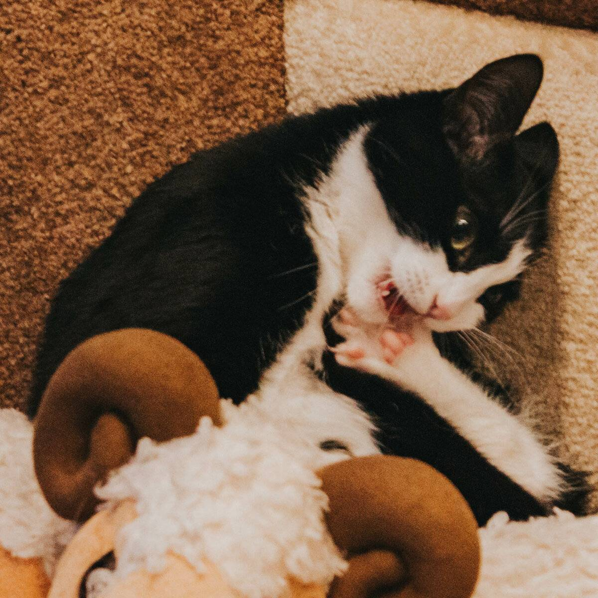 Как отучить кота кусаться