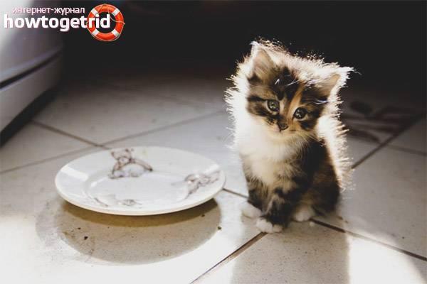 У котенка понос: что делать и как лечить в домашних условиях