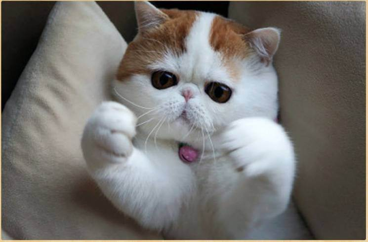 О целебной силе кошек   полезные знания для всех