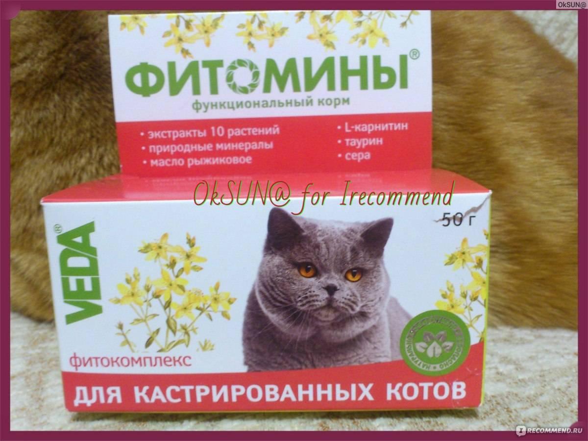 Кастрированный кот постоянно просит есть - что делать?