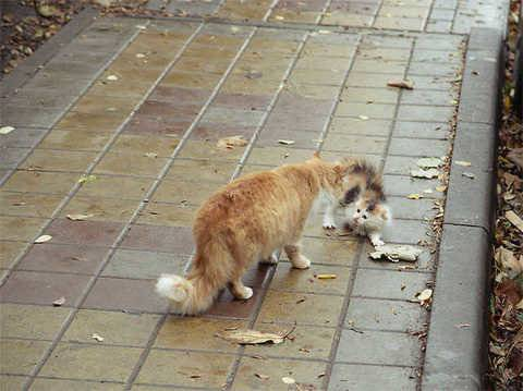 Почему кошки уходят из дома умирать: мнение учёных и приметы