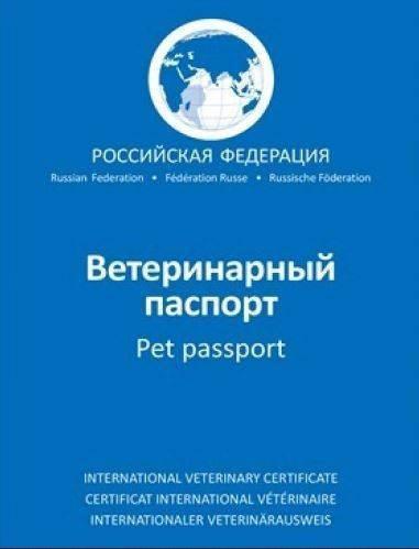 Как ввезти домашнее животное в россию?