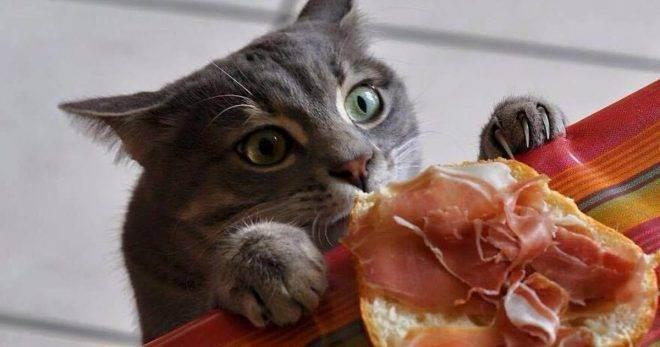 Почему кошка постоянно хочет есть: причины голода и что делать