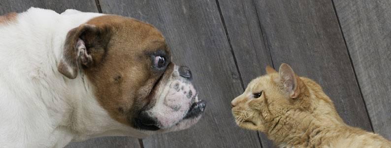 Почему собаки не любят кошек и как их подружить в квартире
