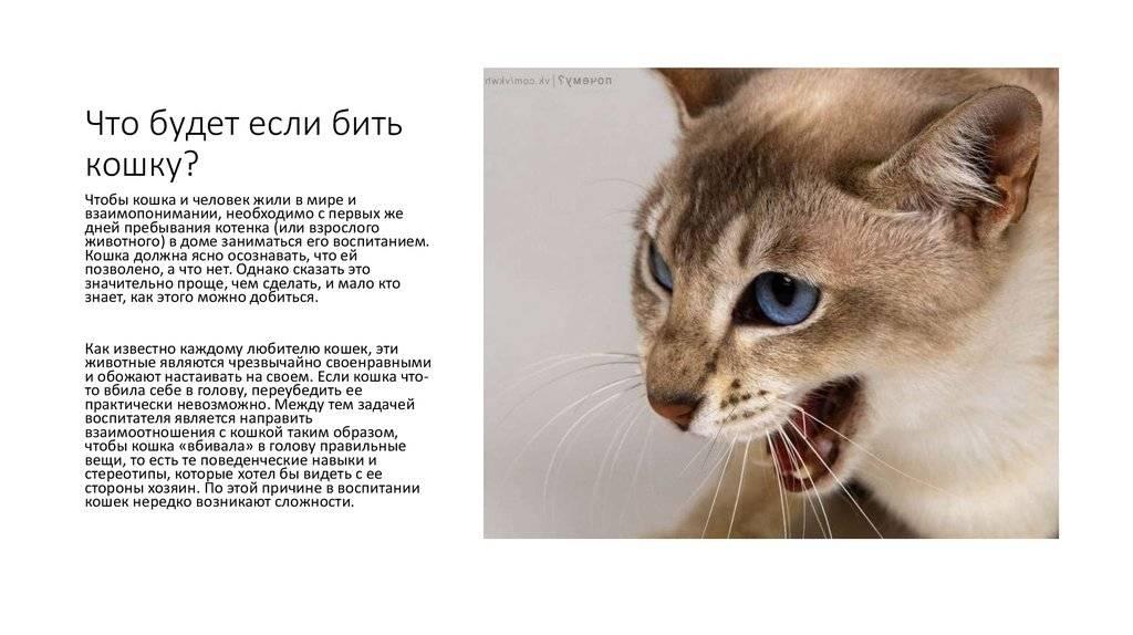 Как наказать кота за плохое поведение, можно ли бить кошку в целях воспитания?