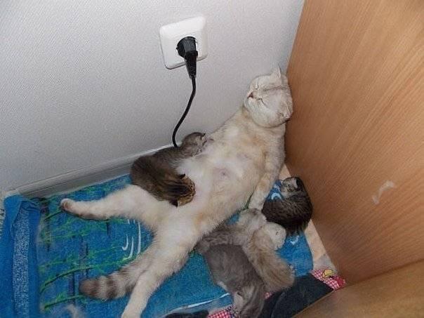 Кошка мяукает сильно роды