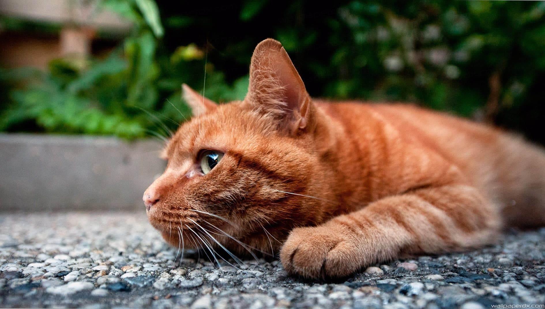 Как отучить кота лазить на кухонный стол: лайфхаки по воспитанию кошки