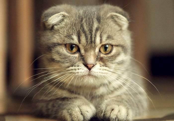 Кормим кошку разными сухими кормами