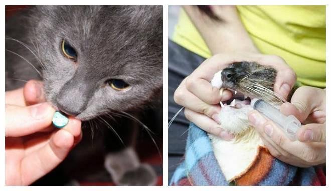 Основные симптомы и признаки глистов у кошек